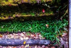 Gras auf Spitzendach stockfotografie