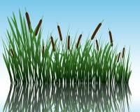 Gras auf Wasser