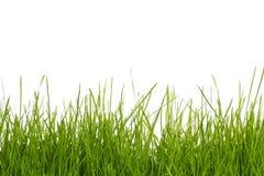 Gras auf Weiß Lizenzfreies Stockfoto
