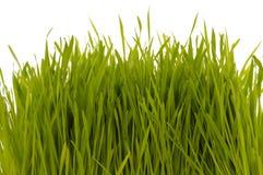 Gras auf weißem Hintergrund lizenzfreie stockfotografie