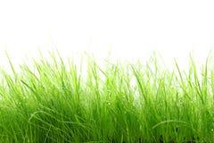 Gras auf weißem Hintergrund Lizenzfreies Stockfoto