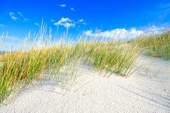 Gras auf WeißSanddünen setzen und blauer Himmel auf den Strand Stockbild