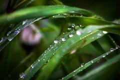 Gras auf Wiese nach Regen stockbilder