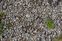 Gras auf Zenstein-Boden bacground Stockbilder