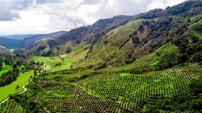 Gras, Bäume und Berge vom Himmel lizenzfreie stockbilder