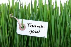 Gras bakgrund med tackar dig royaltyfri foto