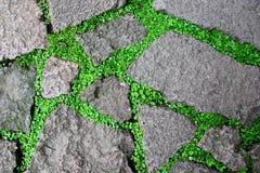 Gras in barsten Stock Foto