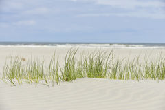 Gras on the beach Royalty Free Stock Images