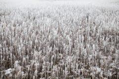 Gras bedeckt mit Reif Stockfotografie