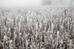 Gras bedeckt mit Reif Lizenzfreie Stockfotografie