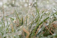 Gras bedeckt mit Reif Lizenzfreie Stockbilder