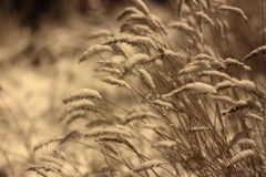 Gras bedeckt mit Schnee nachts Stockfotografie