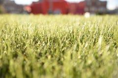 Gras-Beschaffenheit mit Gebäude Lizenzfreie Stockfotografie