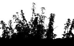 Gras, Betriebsvektor Stockbilder
