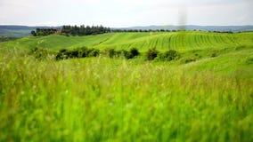 Gras bewegt auf einen Wind, Toskana wellenartig stock video footage