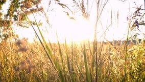Gras bij de weide en het zonlicht stock video