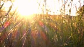 Gras bij de weide en het zonlicht stock footage