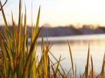 Gras bij rivierbank stock afbeeldingen