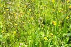 Gras blüht Hintergrund Lizenzfreie Stockfotos