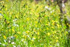 Gras blüht Hintergrund Stockfotografie
