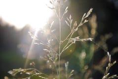 Gras-Blatt Lizenzfreies Stockbild