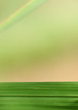 Gras-Blatt und Regenbogen Stockfoto