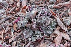 Gras, bloemen en bladereneik, kastanje, okkernoot met dichte omhooggaand van de ochtendvorst die wordt behandeld Royalty-vrije Stock Afbeelding