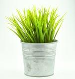 Gras in bloempot op wit wordt geïsoleerde dat Royalty-vrije Stock Foto's
