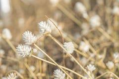 Gras-Blume Lizenzfreie Stockfotos