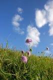 Gras, Blume und Himmel Stockfotos
