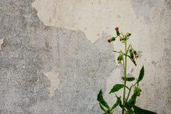 Gras-Blume und Wand Lizenzfreie Stockbilder