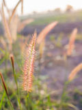 Gras-Blumen-Feld in der Landschaft Lizenzfreie Stockbilder