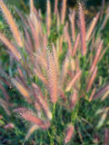 Gras-Blumen-Feld in der Landschaft Lizenzfreies Stockbild