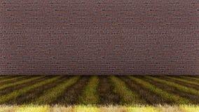 Gras-Boden mit Ziegelstein-Wand-Hintergrund lizenzfreie stockfotografie