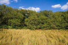 Gras, bos en hemel met wolken Stock Afbeeldingen