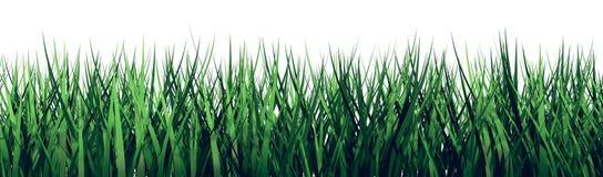 Gras 3D auf einem weißen Hintergrund stockbilder