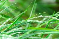 Gras in dalingen van water Stock Foto's