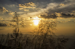 Gras, das den goldenen Himmel übersieht lizenzfreie stockbilder