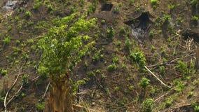Gras, das durch den Schlamm keimt stock video footage
