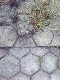 Gras, das durch die Abstände in der Pflasterung wächst Lizenzfreies Stockfoto