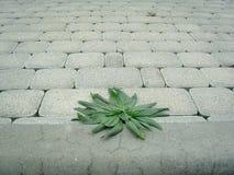 Gras, das durch Plasterung wächst Lizenzfreies Stockbild