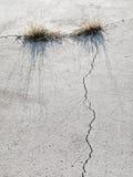 Gras, das in gebrochenem Beton wächst lizenzfreies stockbild
