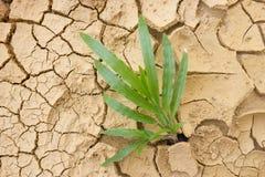 Gras, das im getrockneten Boden wächst Stockfotografie