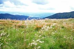 Gras, das im Wind durchbrennt Stockbilder