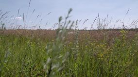 Gras dat in de wind slingert stock footage