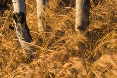 Gras dat door wind wordt geveegd Stock Afbeelding