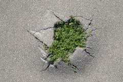 Gras dat een manier maakt door een barst van asfalt royalty-vrije stock afbeeldingen