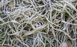 Gras dat met ijs wordt behandeld Royalty-vrije Stock Foto