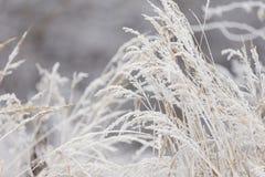 Gras dat met vorst wordt behandeld royalty-vrije stock fotografie