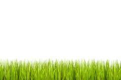 Gras dat op een witte achtergrond wordt geïsoleerde Royalty-vrije Stock Foto
